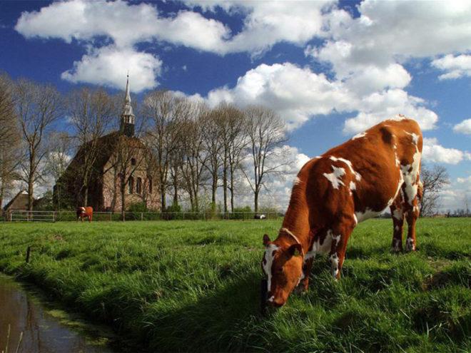 © Stichting Oude Groninger Kerken